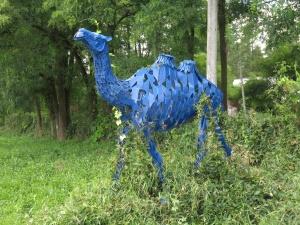 Bill Lishman's Camel