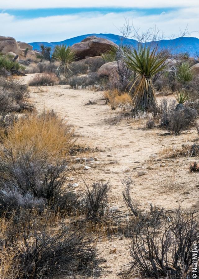 Maze Trail