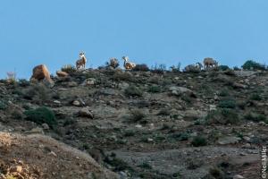 Sheep watching us