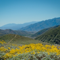 Wildflowers at Whitewater Preserve