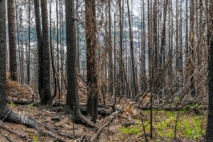 Signs of forest fire