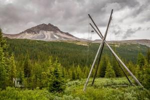 Bear Poles