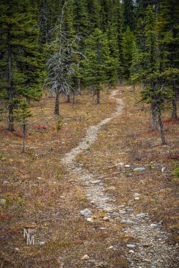 Henry Macleod Trail
