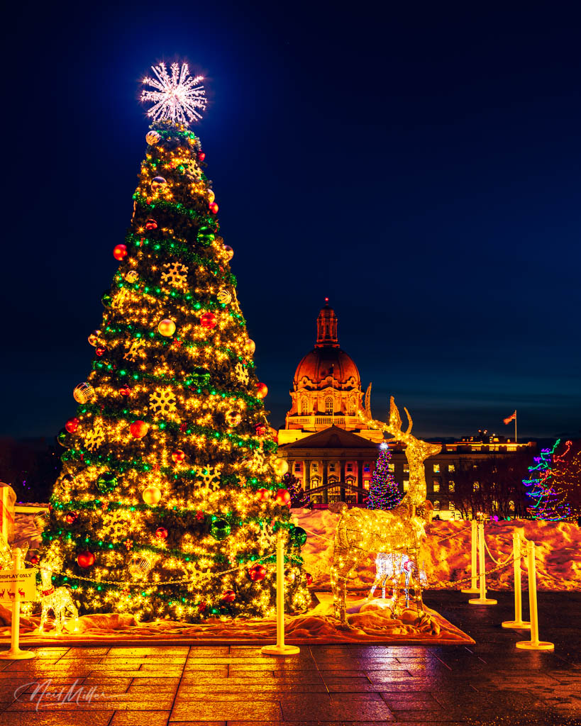 Christmas tree with Alberta Legislature dome in background